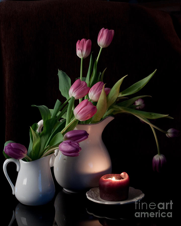 The Beauty Of Tulips Photograph