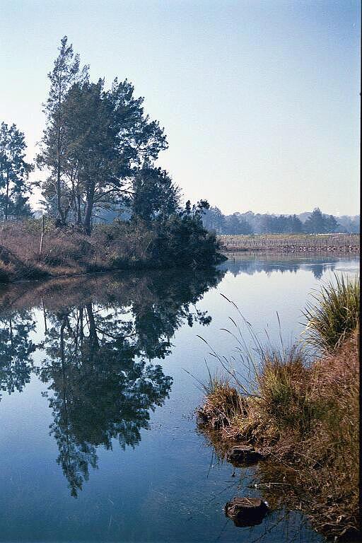 The Bellinger River Photograph