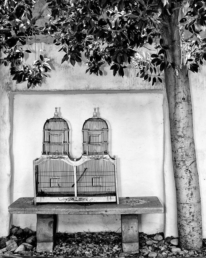 The Bird Cage Photograph