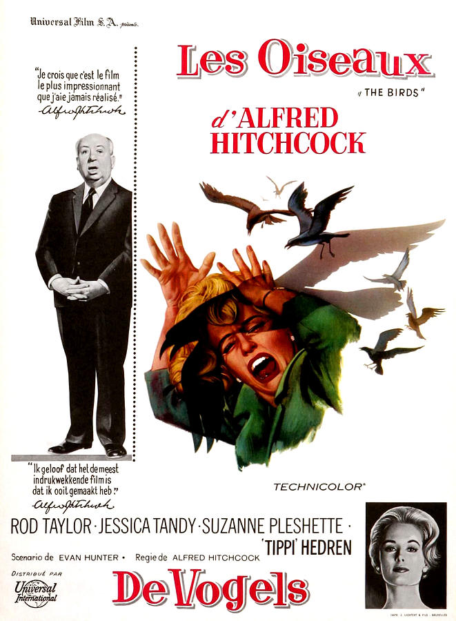 1960s Portraits Photograph - The Birds, Aka Alfred Hitchcocks The by Everett