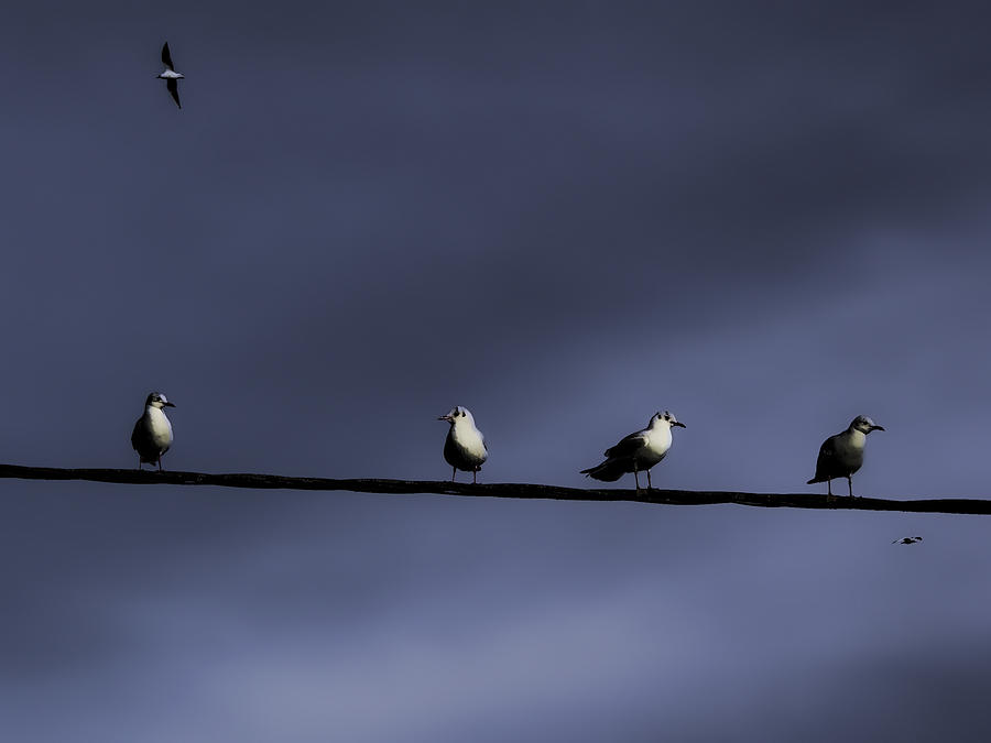 The Birds. Photograph