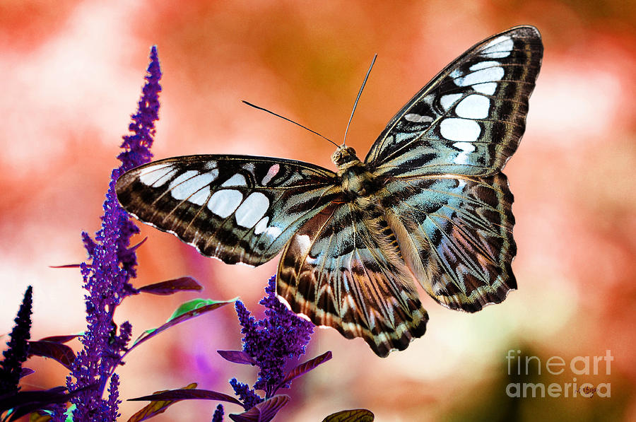 The Blue Clipper Photograph  - The Blue Clipper Fine Art Print