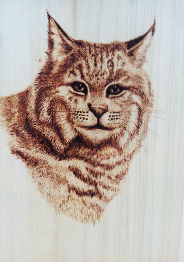 Bobcat Pyrography - The Boss by Susan Rice