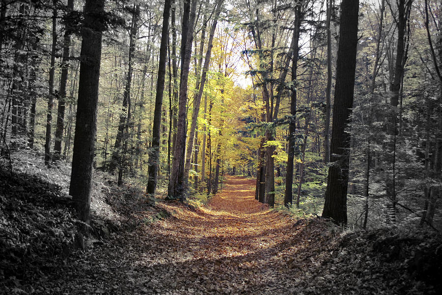 The Color Of The Forest Photograph