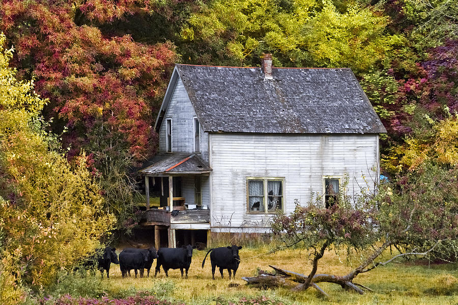 The Cows Came Home Photograph  - The Cows Came Home Fine Art Print