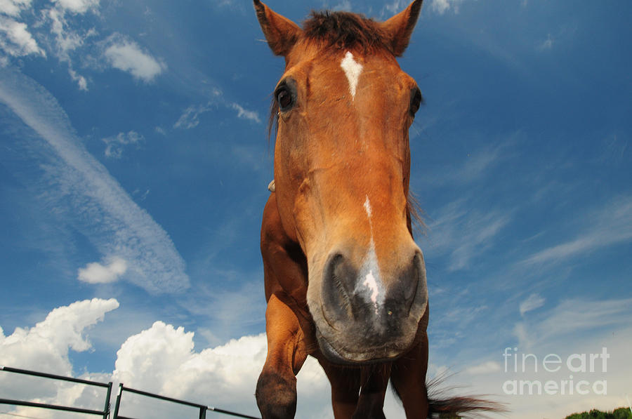 The Curious Horse Photograph  - The Curious Horse Fine Art Print