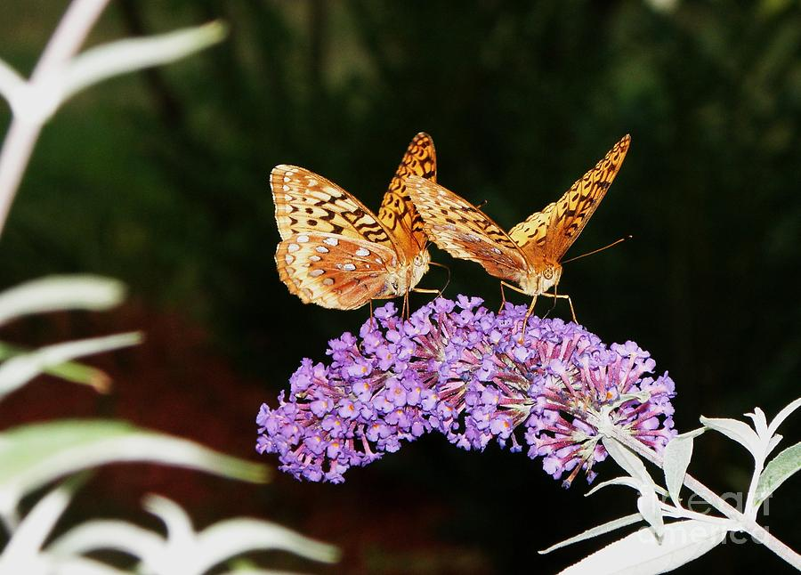 The Dancing Butterflies Photograph