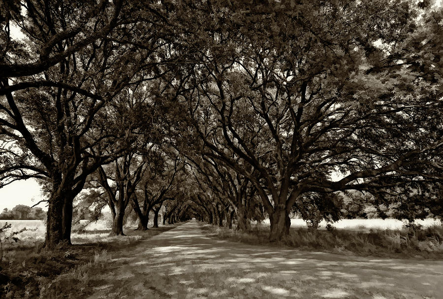 The Deep South Bw Photograph  - The Deep South Bw Fine Art Print