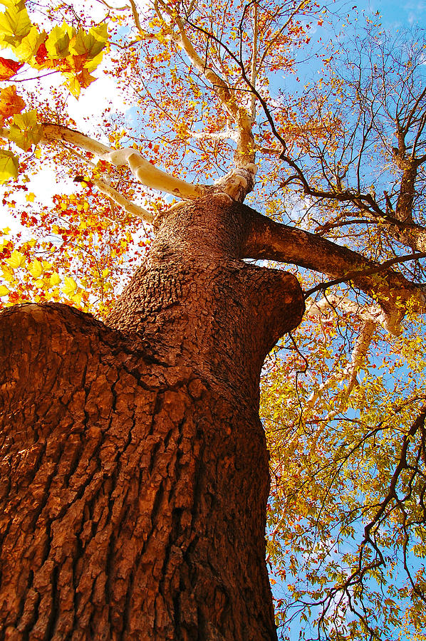 The Deer  Autumn Leaves Tree Photograph