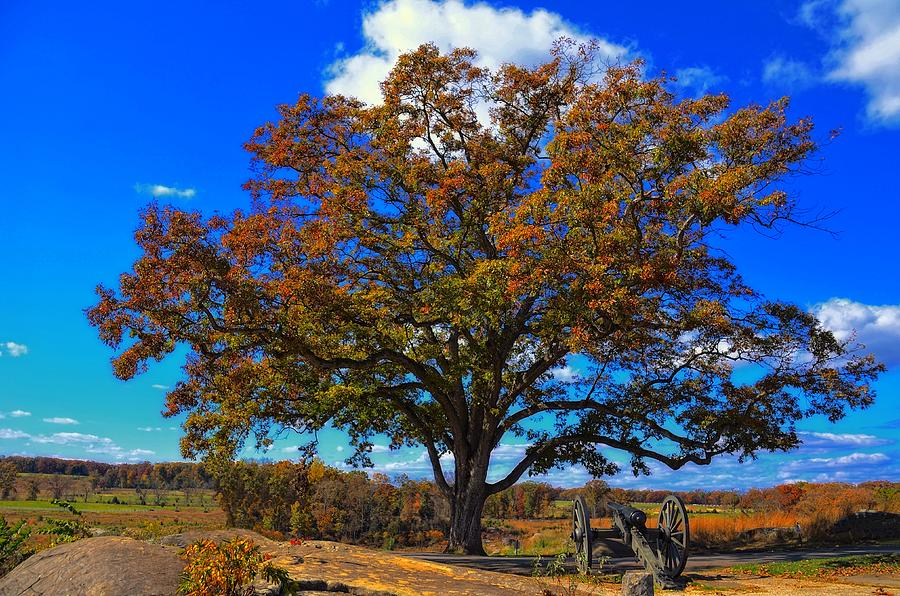 The Devils Den Witness Tree. Photograph  - The Devils Den Witness Tree. Fine Art Print