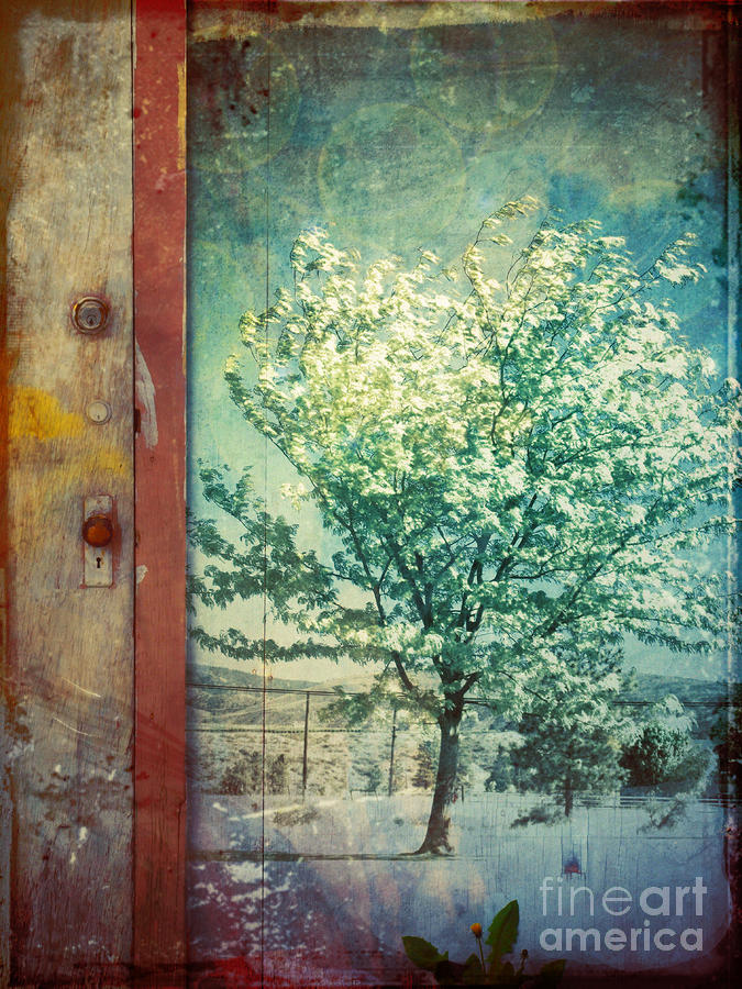 The Door And The Tree Photograph