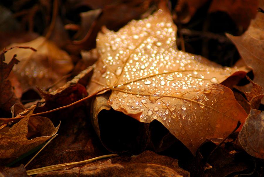 Usa Photograph - The Enlightened Maple Leaf by LeeAnn McLaneGoetz McLaneGoetzStudioLLCcom