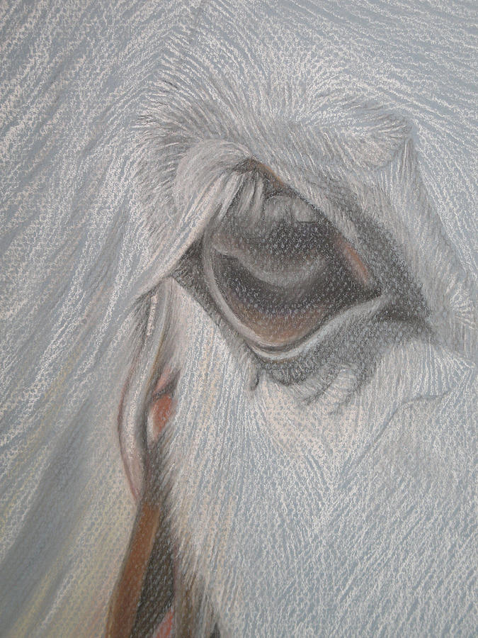 Horse Pastel - The Eye  by Stephanie L Carr