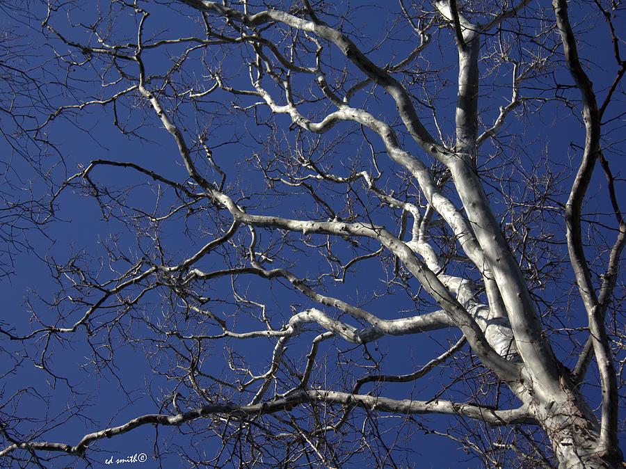 The Family Tree Photograph