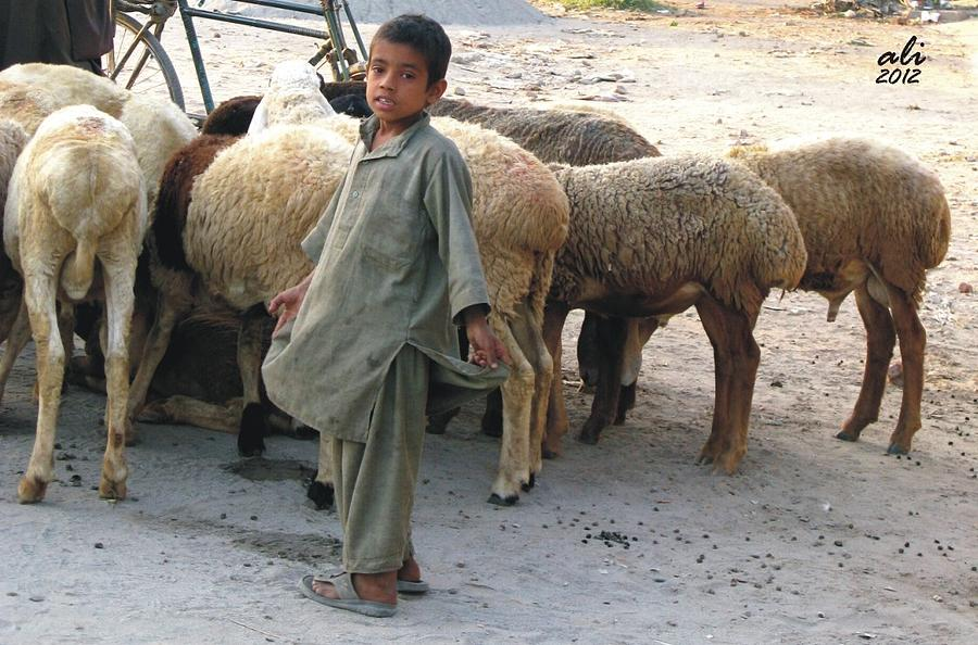Pakistan Photograph - The Flock by Bobby Dar