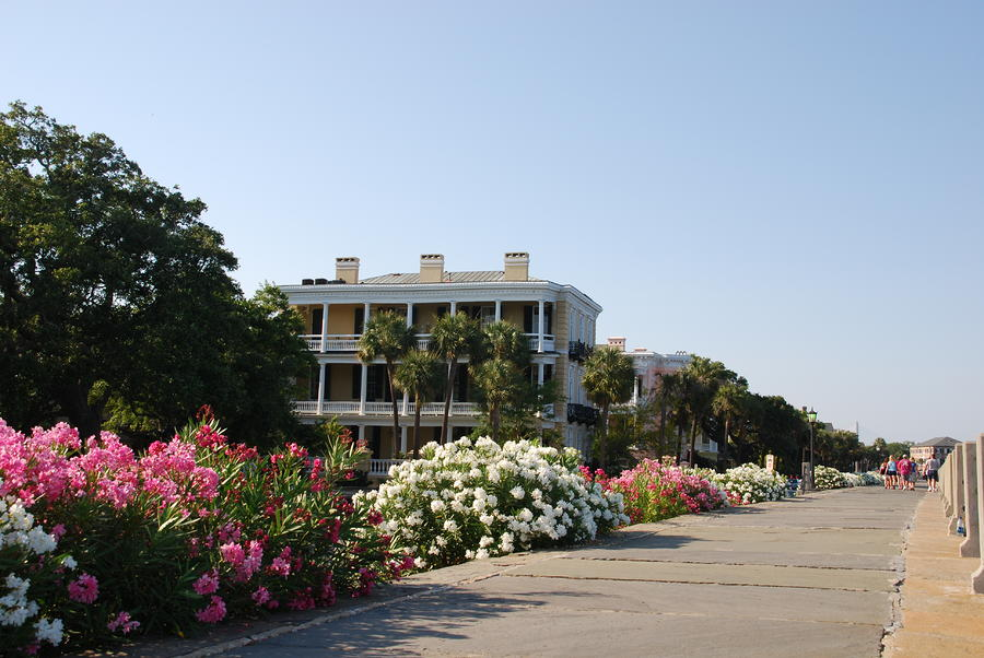 The Flowers At The Battery Charleston Sc Photograph