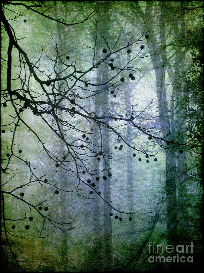 Forest Photograph - The Forest Cathedral by Judi Bagwell