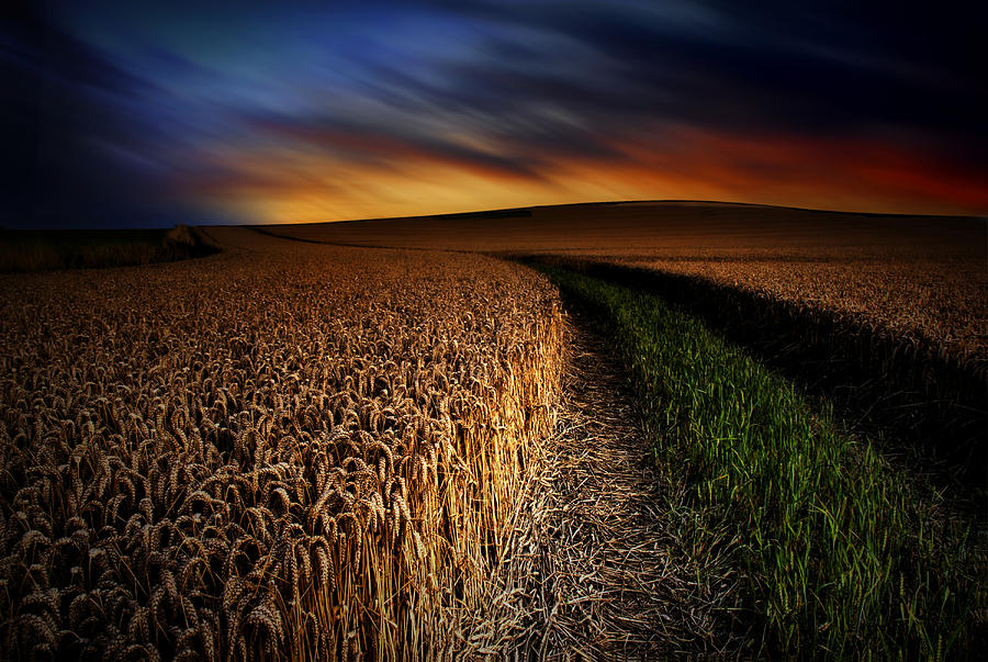 Field Sunset Photograph - The Forgotten Path by John Chivers