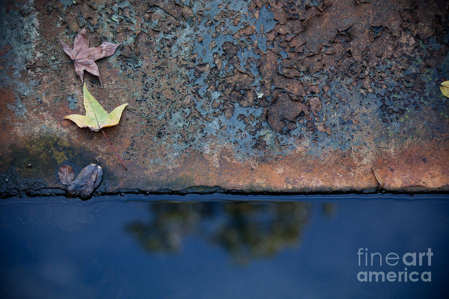 The Garden Pond Photograph  - The Garden Pond Fine Art Print