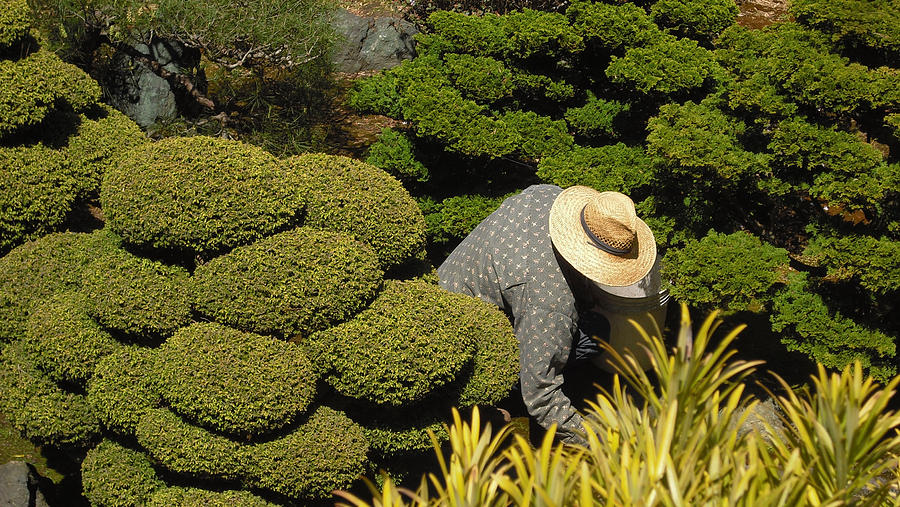 Richard Reeve Photograph - The Gardener by Richard Reeve