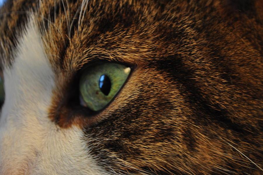 Cat Look Photograph - The Gaze by Crespo