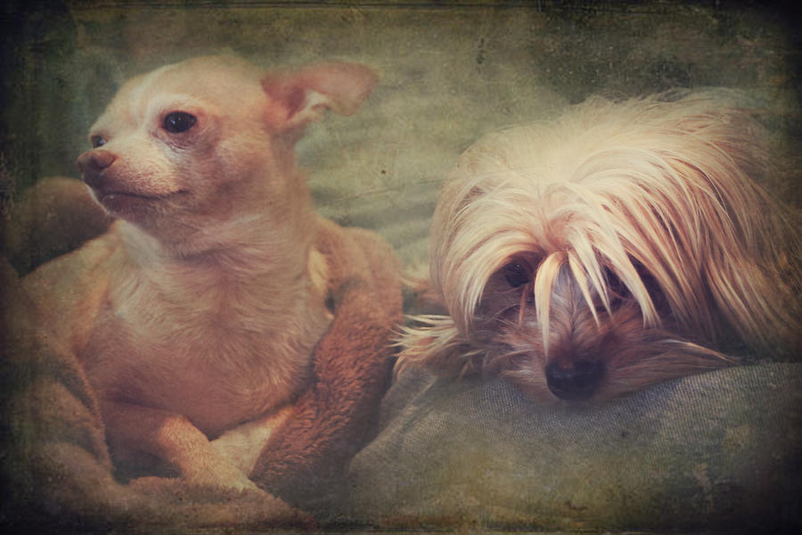 Dogs Photograph - The Girls by Laurie Search