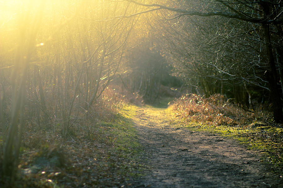 The Glowing Path Photograph