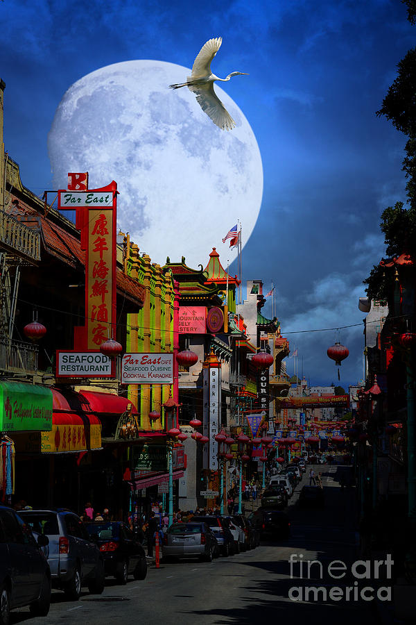 The Great White Egret Of Chinatown . 7d7172 Photograph  - The Great White Egret Of Chinatown . 7d7172 Fine Art Print