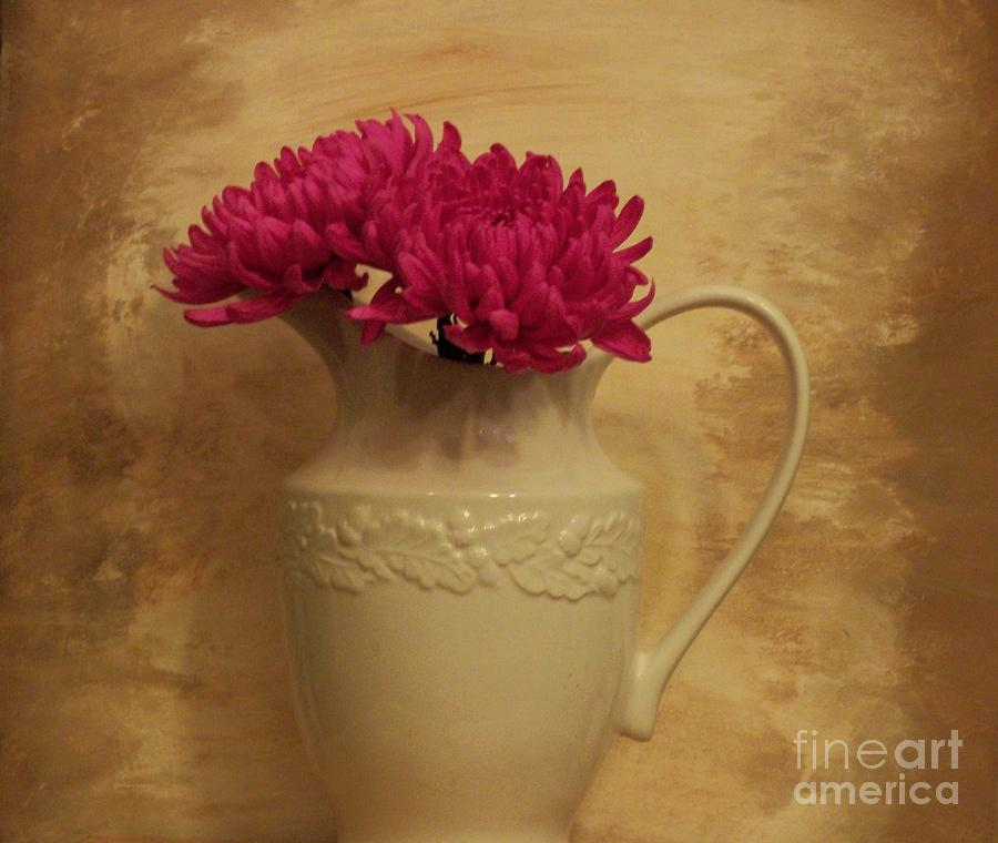 The Grecian Magenta Mum Photograph