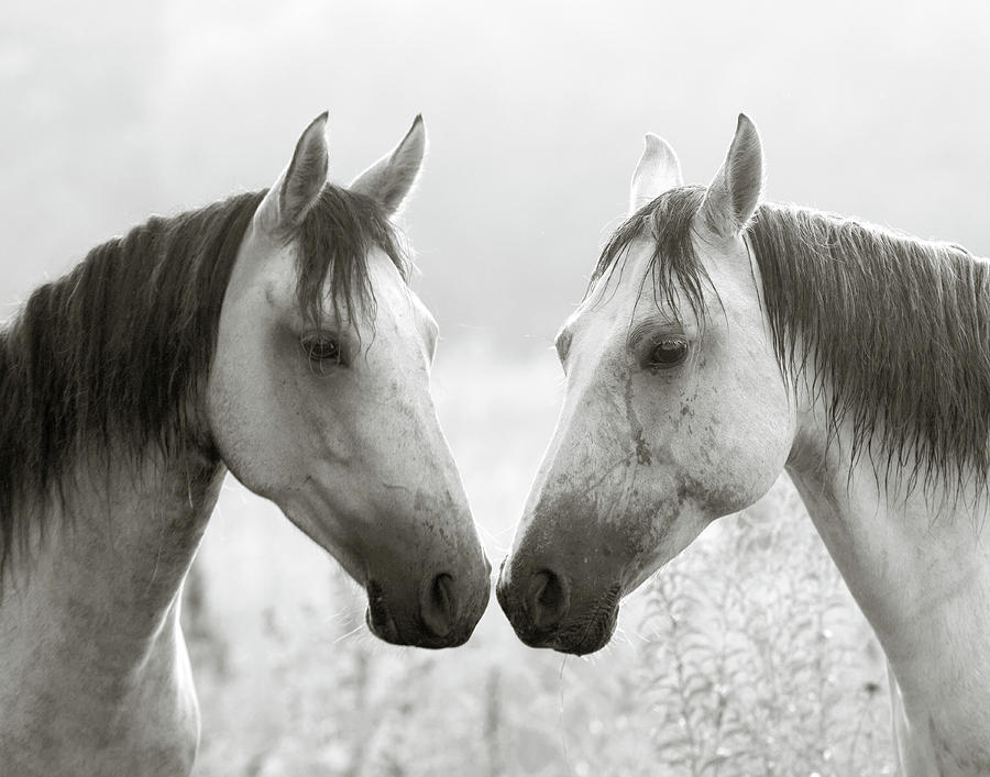 The Greys Photograph  - The Greys Fine Art Print
