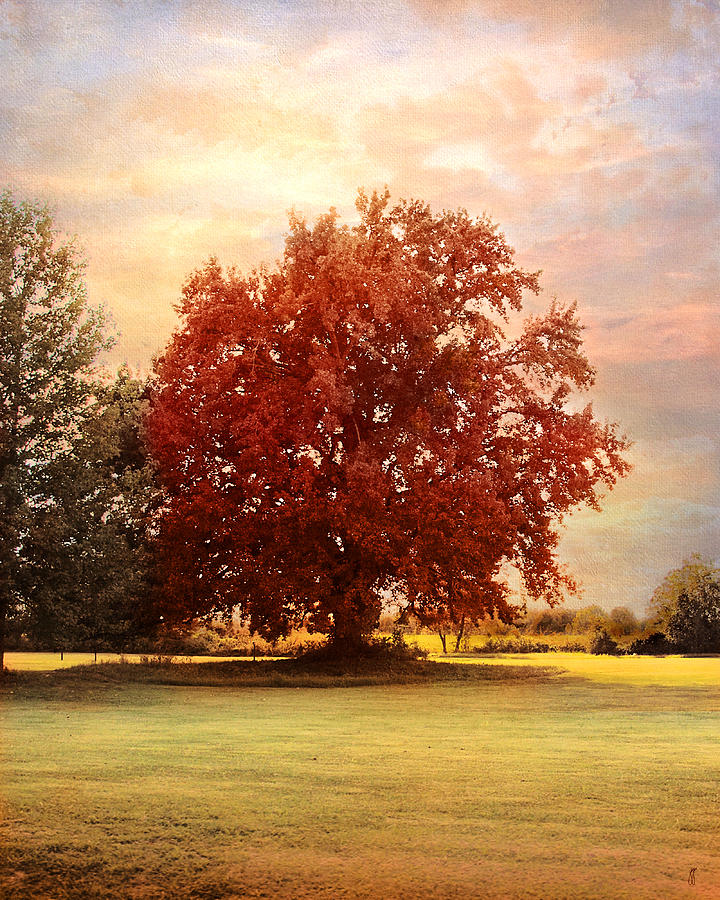 The Healing Tree  Photograph  - The Healing Tree  Fine Art Print