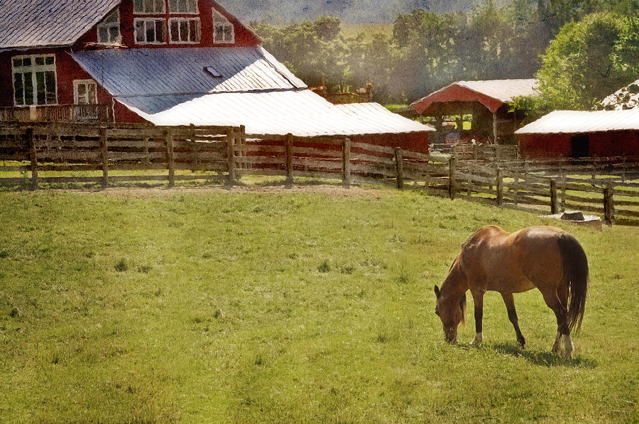 The Horse In The Barn Yard Photograph