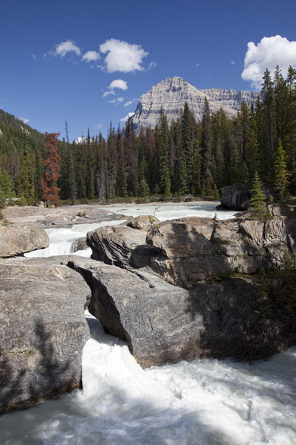 The Kicking Horse River Winds Photograph