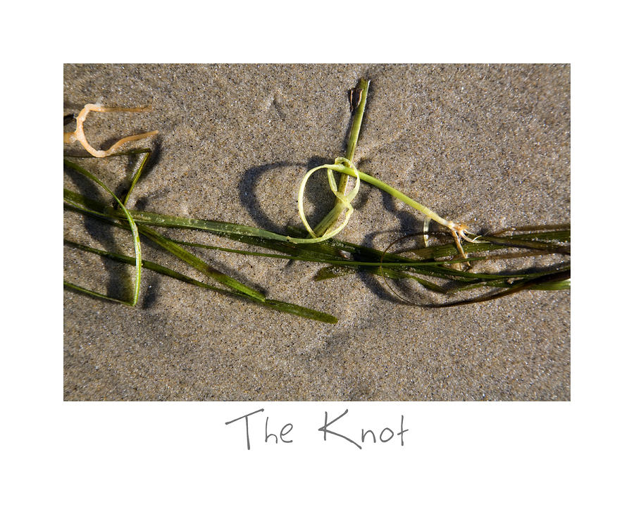 The Knot Photograph  - The Knot Fine Art Print