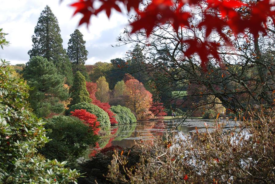 The Lake At Sheffield Park Photograph