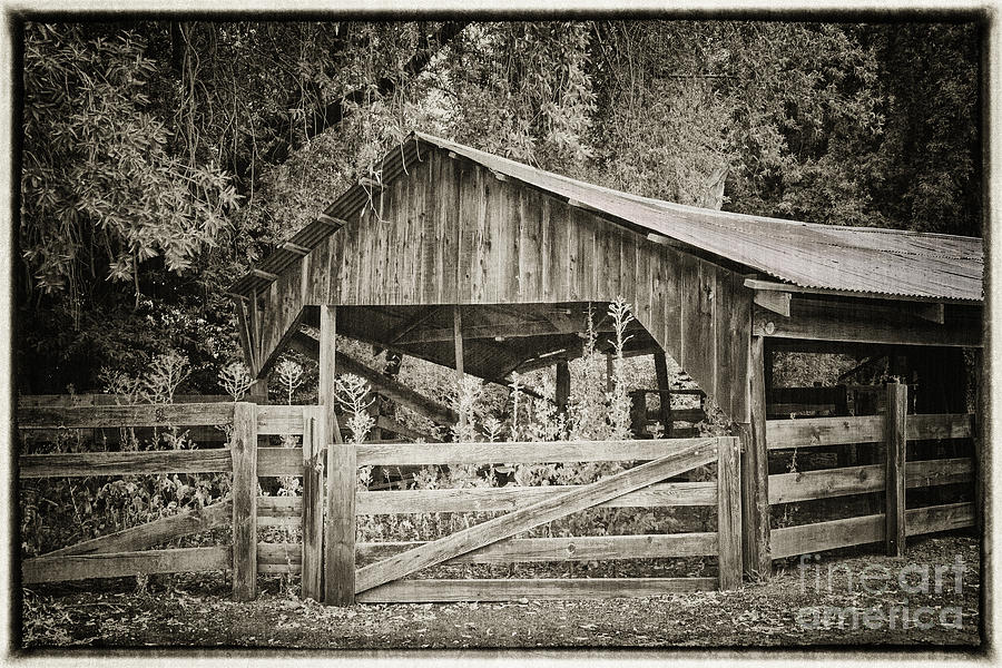 The Last Barn Photograph  - The Last Barn Fine Art Print