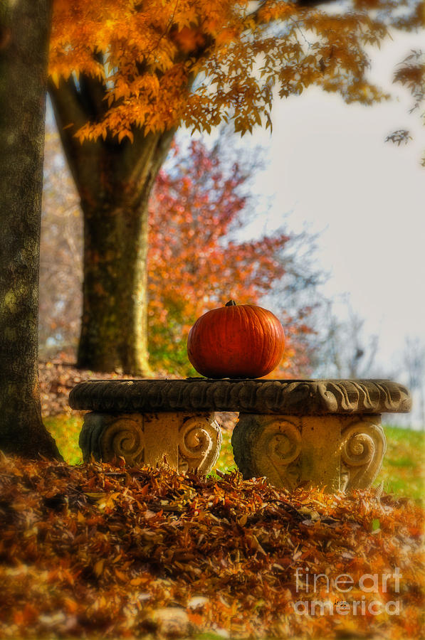 The Last Pumpkin Photograph  - The Last Pumpkin Fine Art Print