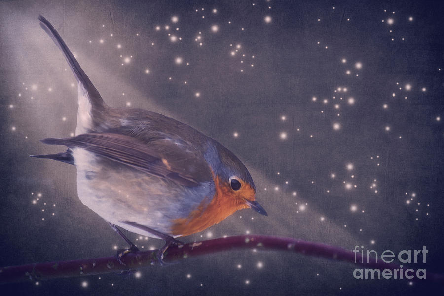 The Little Robin At The Night Photograph