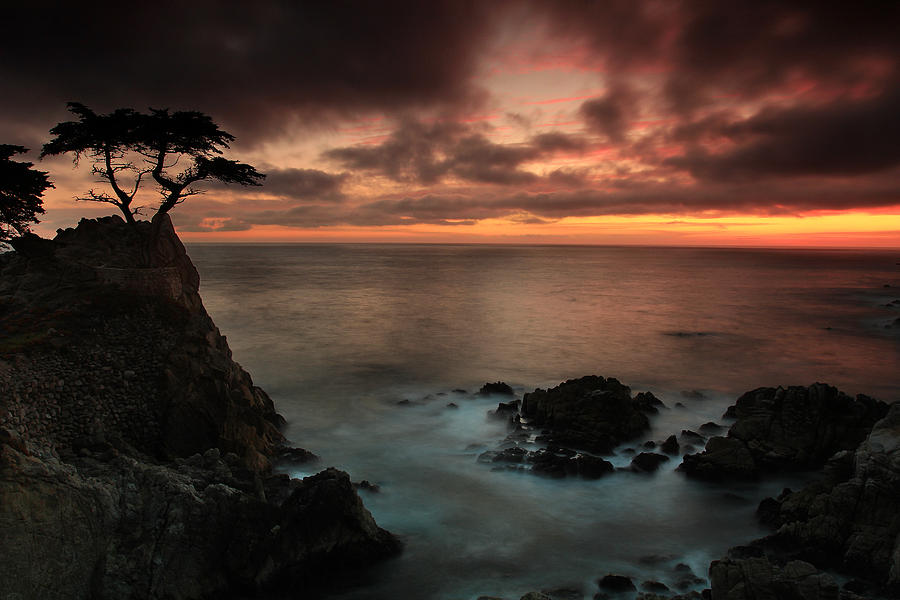 The Lone Cypress Observes A Pebble Beach Sunset Photograph  - The Lone Cypress Observes A Pebble Beach Sunset Fine Art Print
