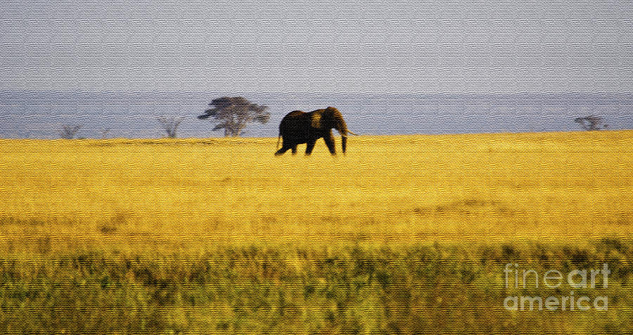 The Lone Elephant Digital Art  - The Lone Elephant Fine Art Print