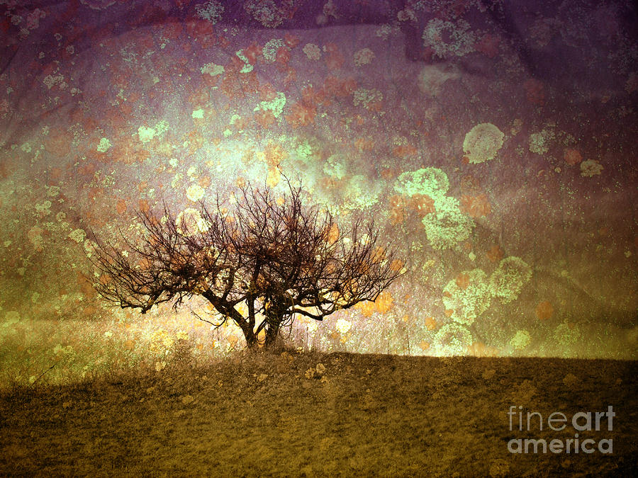 The Lone Tree Photograph  - The Lone Tree Fine Art Print