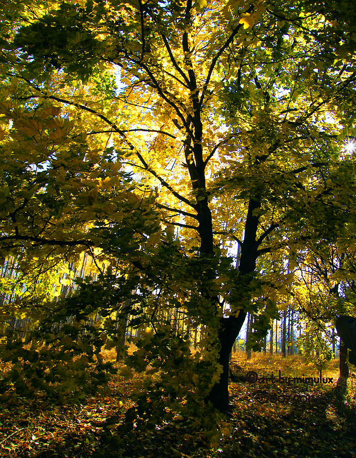 The Luminous Tree Photograph