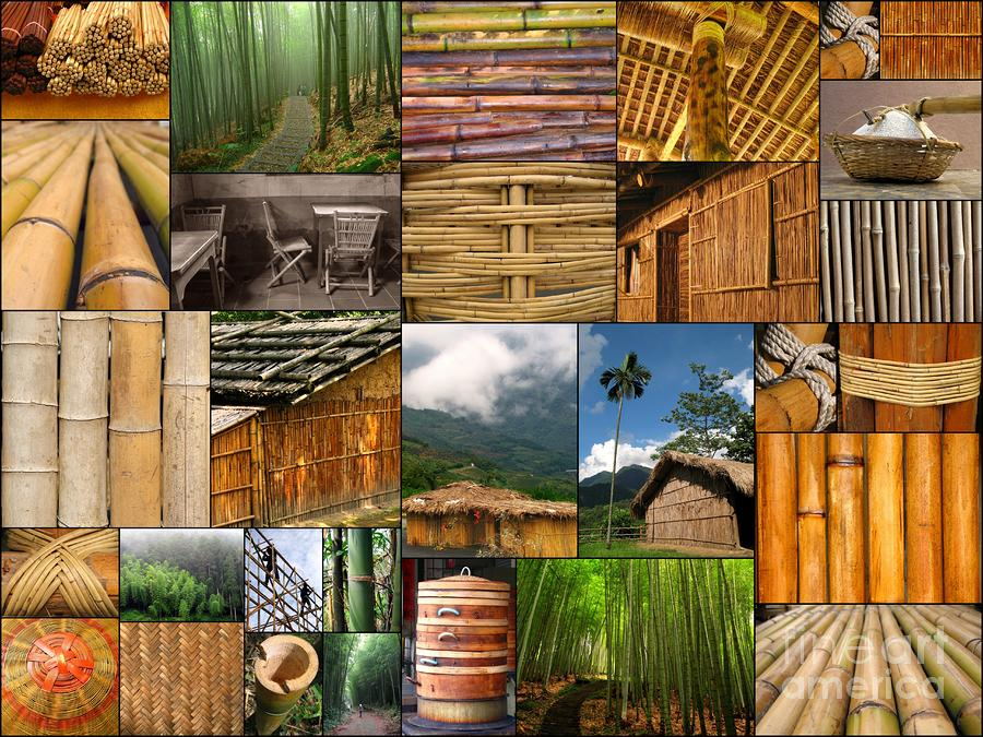 The Magic Of Bamboo Photograph