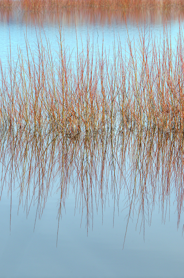 The Marsh Mirror Photograph  - The Marsh Mirror Fine Art Print