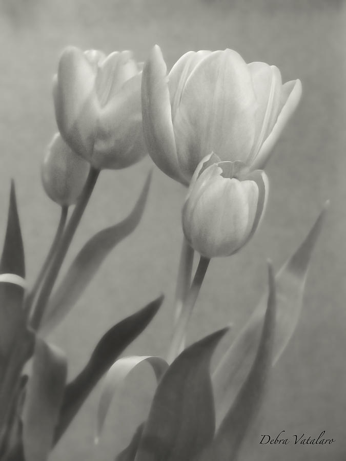 Black And White In The Mirror Photograph - The Mirror Tulips by Debra     Vatalaro