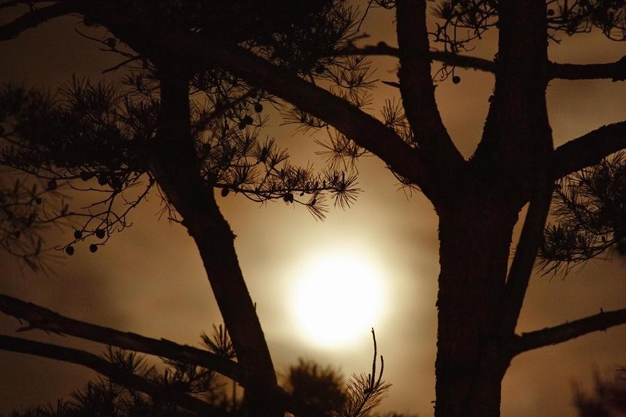 The Moon Rises Above Nanko Lake Photograph