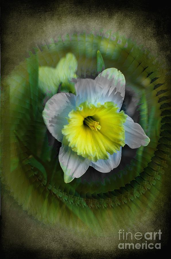 The Narcisstic Narcissus Photograph  - The Narcisstic Narcissus Fine Art Print