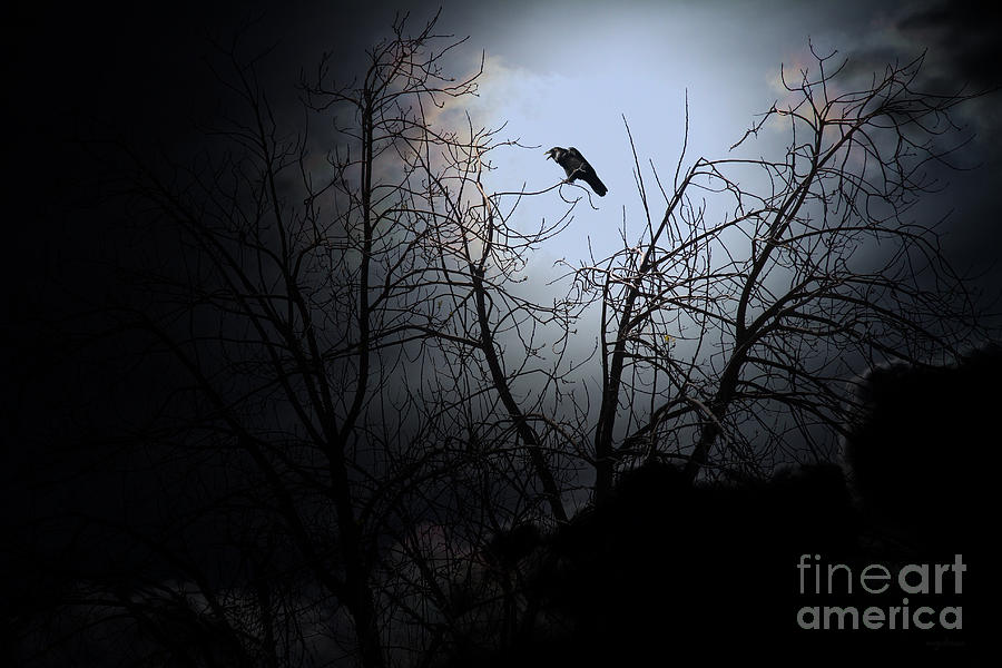 The Night The Raven Appeared In My Dream . 7d12631 Photograph