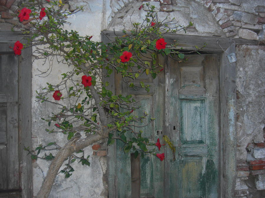 The Old Door And The Rose Bush Photograph  - The Old Door And The Rose Bush Fine Art Print