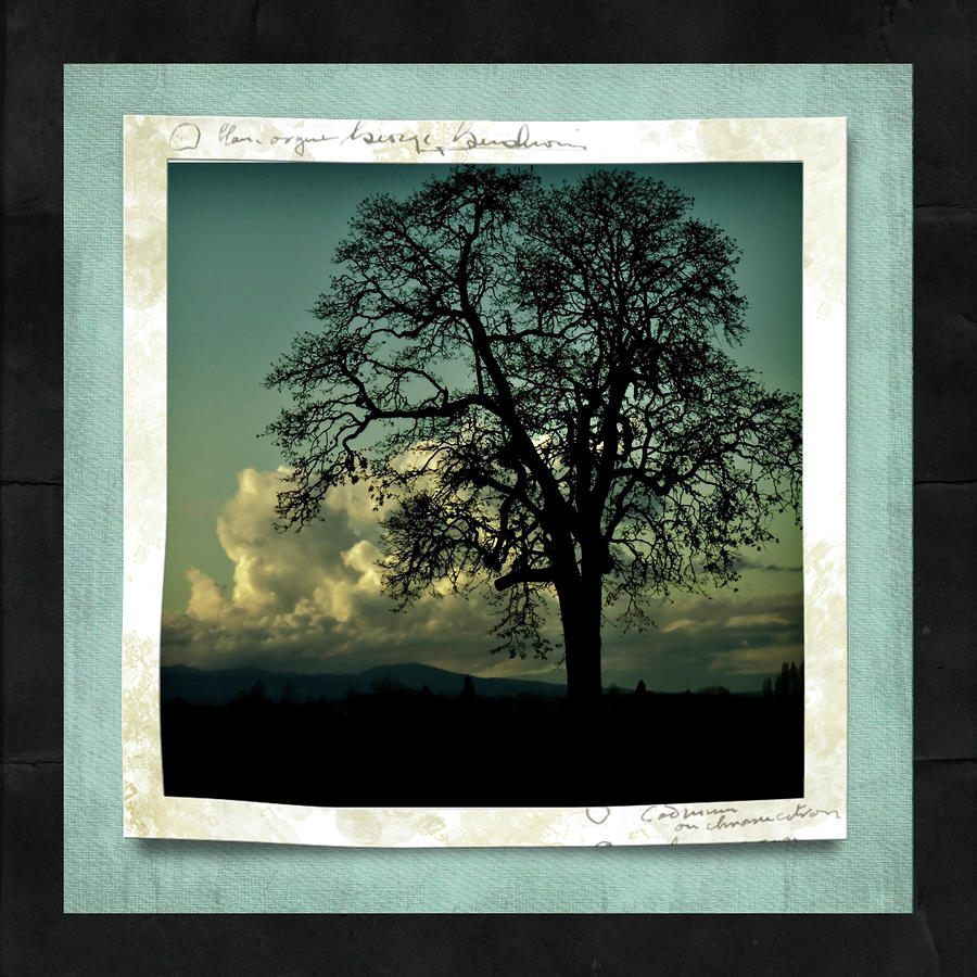 The Old Oak Photograph